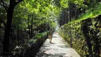 Across Western Slovenia: Postojna to Trieste 21