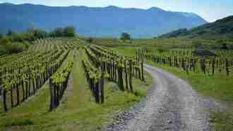 Across Western Slovenia: Postojna to Trieste 8