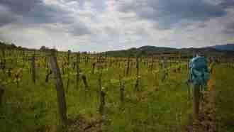 Across Western Slovenia: Postojna to Trieste 1
