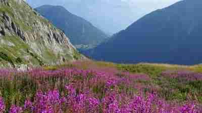 Tour du Mont Blanc from Martigny in Comfort 48