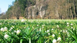 Bohemian paradise self-guided tour Czech Republic valley of lilies