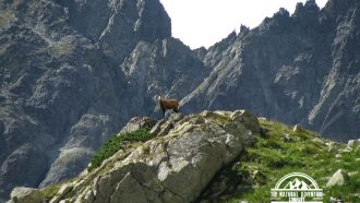 self guided hiking, Carpatian mountains, Poland, mountain goats
