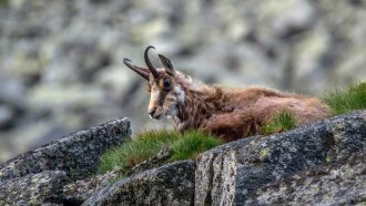 Slovakian Alps: High Tatras 13
