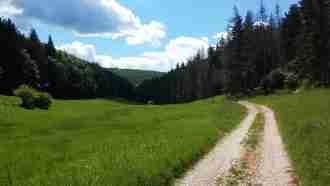 Huta Meadow2