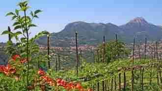 Alta Via: Amalfi and Sorrento Coast to Coast 42