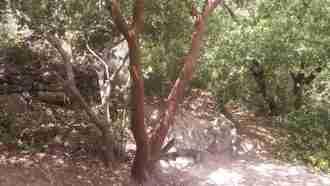 Judaean Hills: Trails to Jerusalem 2