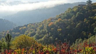 Ribeira Sacra: The Gorges and Vineyards of Galicia 5