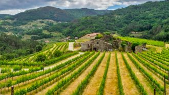 Ribeira Sacra: The Gorges and Vineyards of Galicia 38
