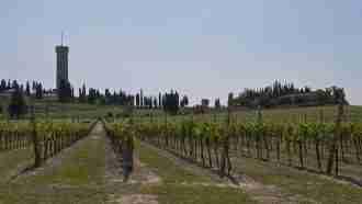 Piedmont Wine Country on Wheels 88