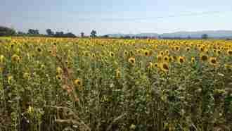Cycling the Tuscany Coast: Pisa to Elba 19
