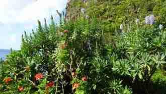 Coastal and Levada Trails of Madeira 62