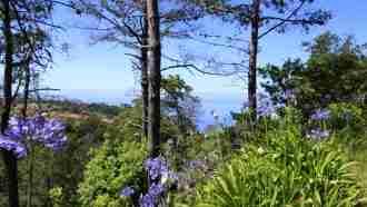 Coastal and Levada Trails of Madeira 49