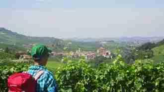 Wine Trails of Piedmont and Liguria: Alba to San Remo 49