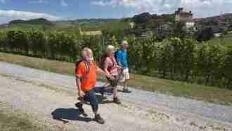 Wine Trails of Piedmont and Liguria: Alba to San Remo 48