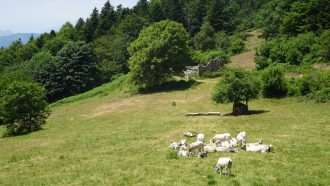 Wine Trails of Piedmont and Liguria: Alba to San Remo 47