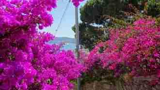Wine Trails of Piedmont and Liguria: Alba to San Remo 36