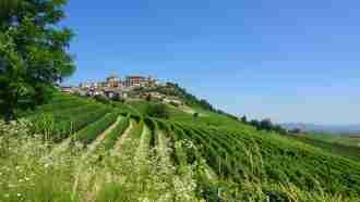 Wine Trails of Piedmont and Liguria: Alba to San Remo 29