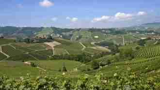 Wine Trails of Piedmont and Liguria: Alba to San Remo 27