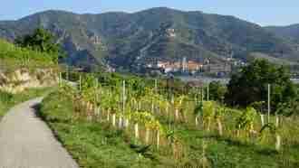 Walking in Wachau Wine Country 33