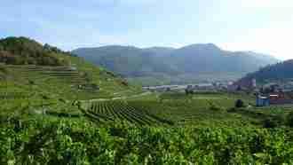 Walking in Wachau Wine Country 32