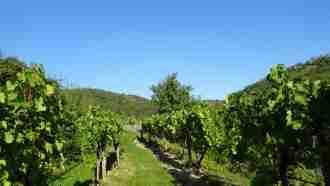Walking in Wachau Wine Country 29