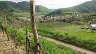 Walking in Wachau Wine Country 45