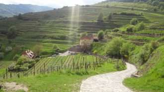 Walking in Wachau Wine Country 41