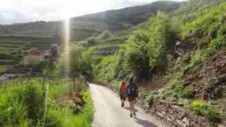 Walking in Wachau Wine Country 39