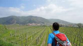 Walking in Wachau Wine Country 38
