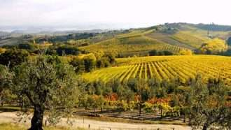 Chianti Wine Trails: Florence to Siena 41