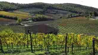 Chianti Wine Trails: Florence to Siena 39