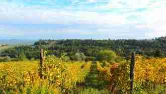 Chianti Wine Trails: Florence to Siena 32