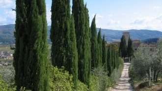 Chianti Wine Trails: Florence to Siena 30