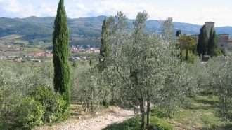 Chianti Wine Trails: Florence to Siena 29