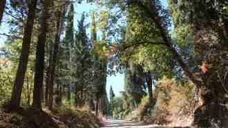 Chianti Wine Trails: Florence to Siena 26
