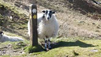 West Highland Way 6