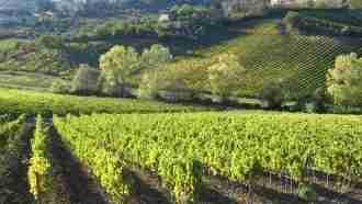 Chianti Wine Trails: Florence to Siena 15