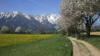 Walking in the Vienna Alps 9