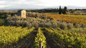 Chianti Wine Trails: Florence to Siena 14