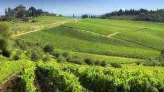 Chianti Wine Trails: Florence to Siena 42
