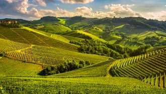 Piedmont Wine Country on Wheels, cycling holiday in piedmont, italy cycling holidays, cycling holidays in italy, wine trails, wine trails walking holidays