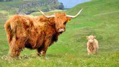 Skye Trail: Across the Isle of Skye 10