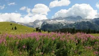 The Alpe-Adria Circuit 20