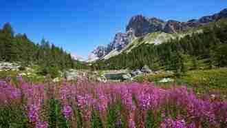 The Alpe-Adria Circuit 17