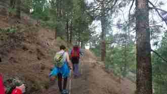 Trails and Calderas of La Palma 7