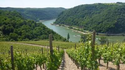 Castles and Vineyards of the Rhine Valley 28