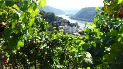 Castles and Vineyards of the Rhine Valley 41