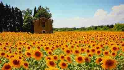 Van Gogh's Provence
