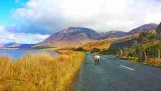 Connemara Way 31