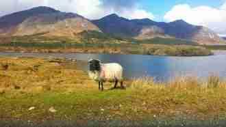 Connemara Way 32